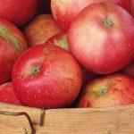 کاربرد نیتروژن در صنعت تولید و نگهداری میوه